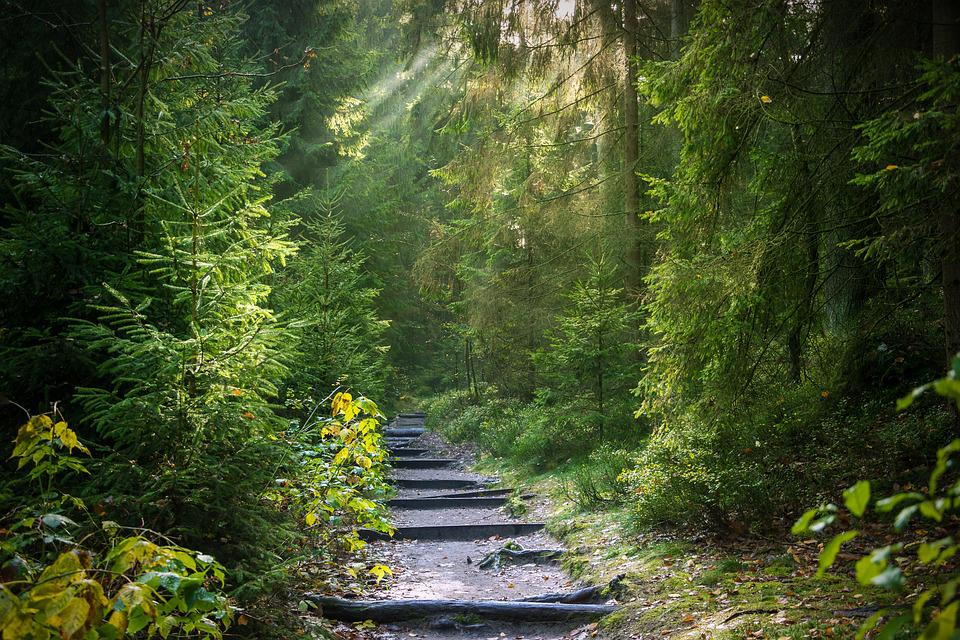 Forest, Away, Forest Path, Path, Trees, Light Beam