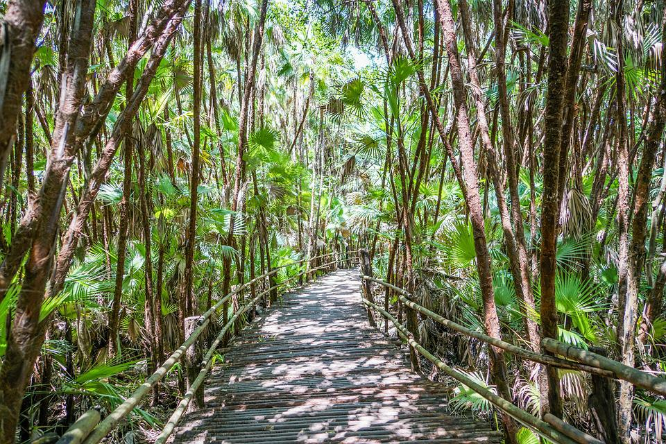 Belize, Bacab Jungle Park, Walkway, Path, Central