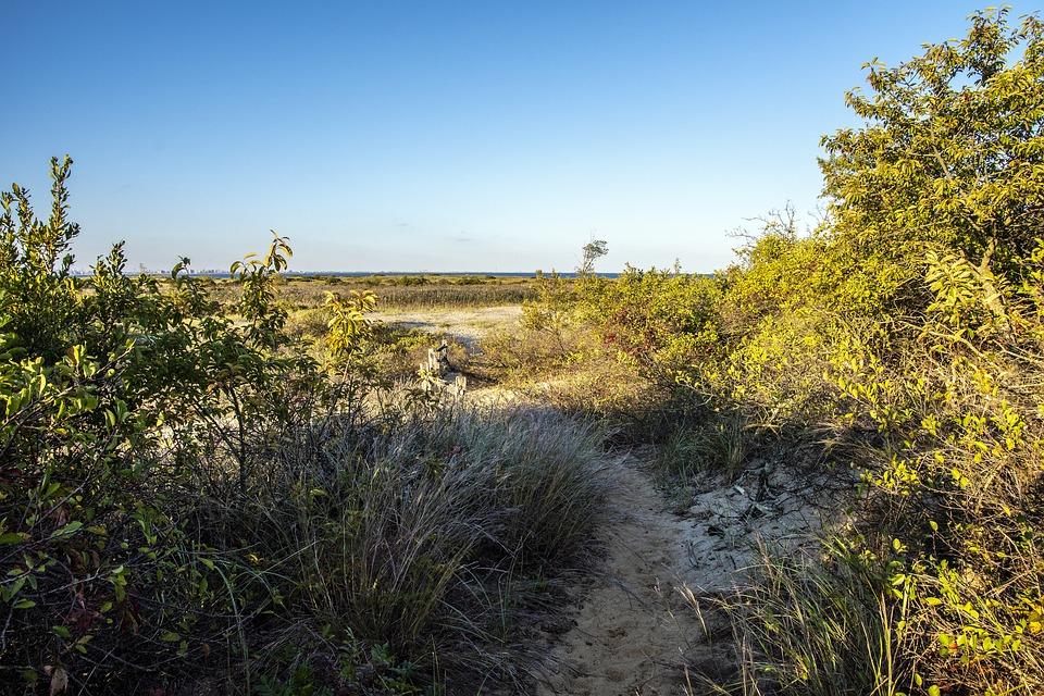 Coast, Plants, Trail, Bushes, Shrubs, Path, Seaside
