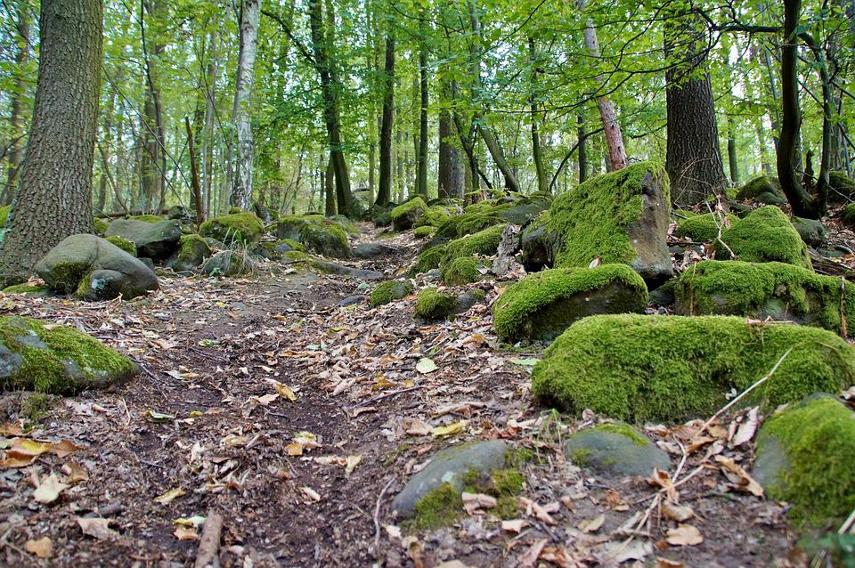 Path, Forest, In The Forest, Stones, Covered, Moss