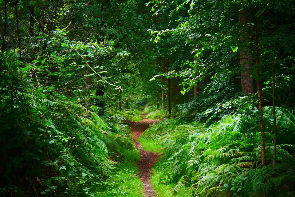 Path, Forest Path, Nature Trail, Hiking, Nature, Trees