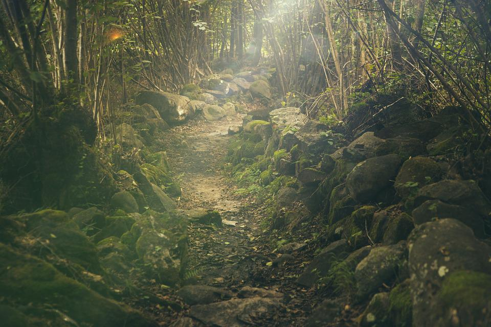 Forest, Path, Mystical, Rocks, Fairytale, Sunlight