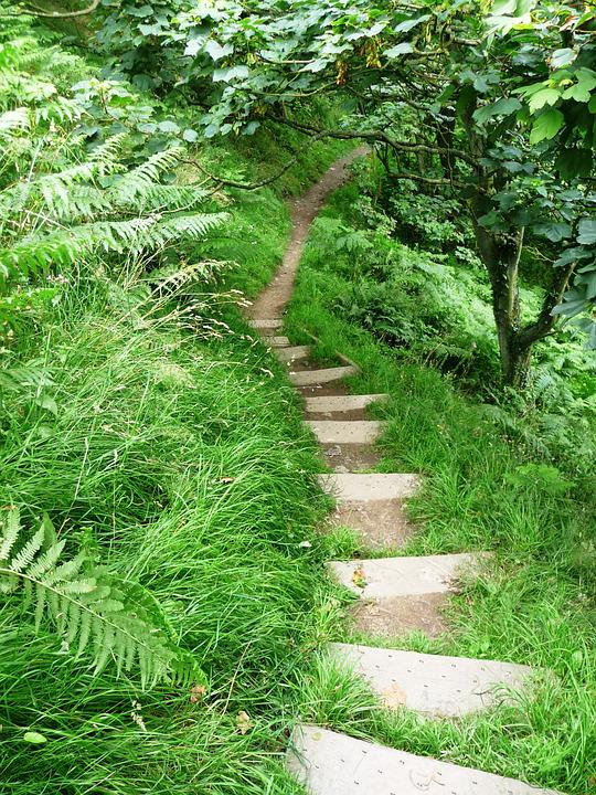 Path, Field, Staircase, Forest, Nature, Hiking