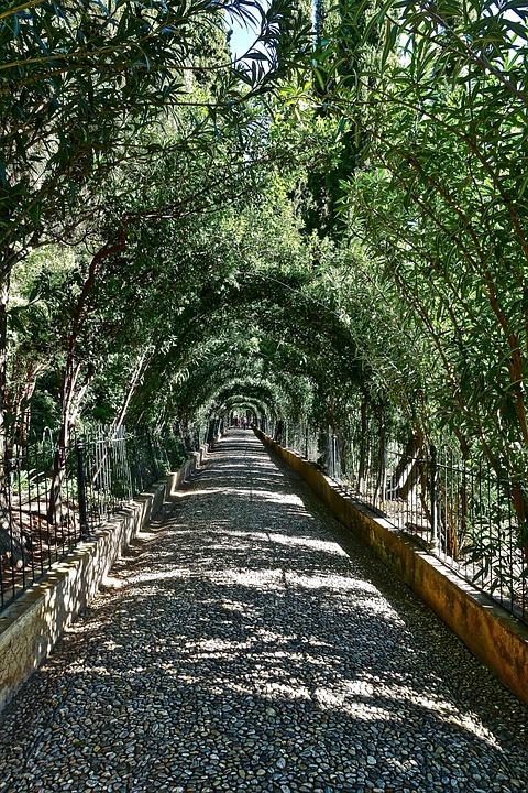 Path, Greenery, Landscape, Tranquil, Garden, Sunlight