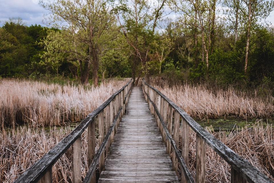 Bridge, Brush, Trees, Path, Landscape, Nature, Trail