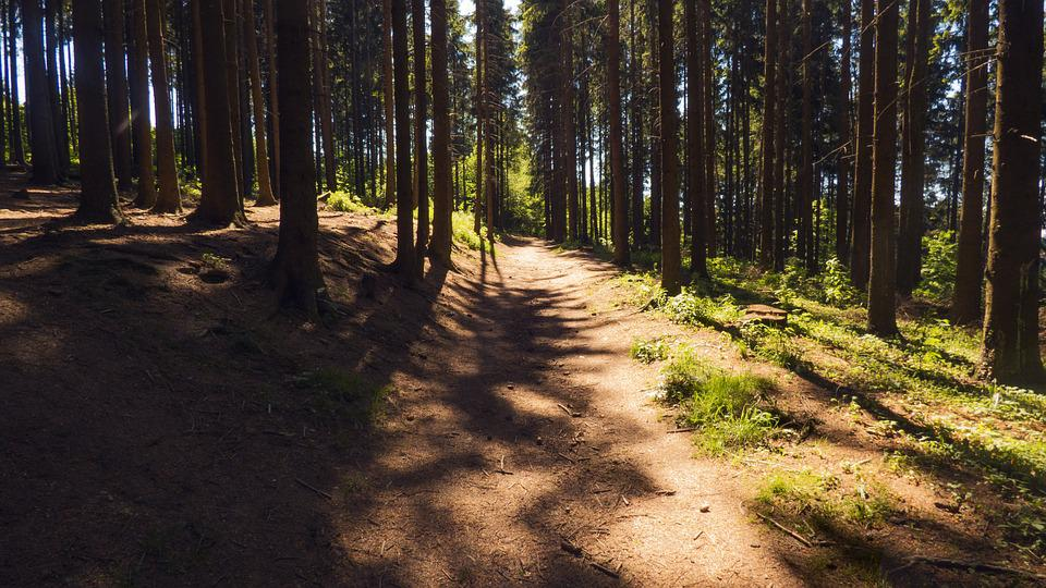 Path, Forest, Forest Road, Nature, Bohemia, Light
