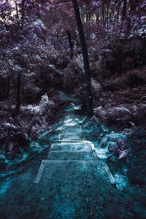 Path, Trees, Forest, Landscape, Nature, Mystical, Mood