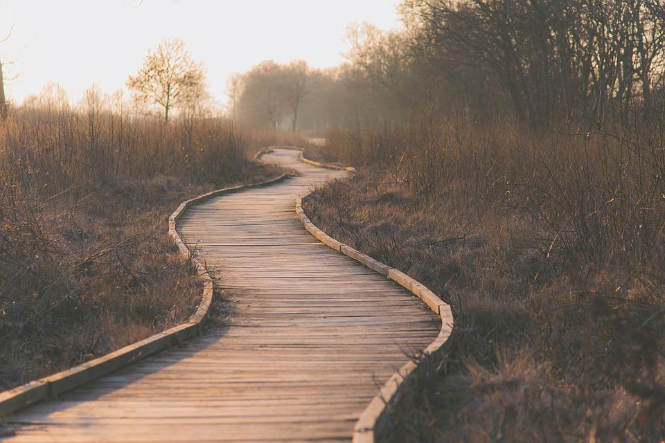 Path, Wetlands, Outdoors, Wooden Planks, Grasses