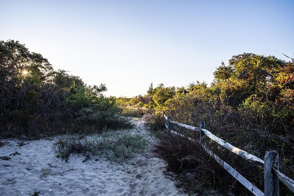 Coast, Plants, Trail, Sand, Bushes, Shrubs, Path