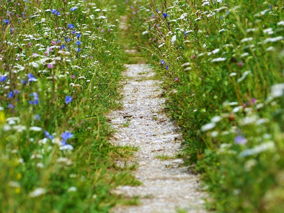 Away, Path, Stones, Meadow, Wild Flowers, Wayside, Lane