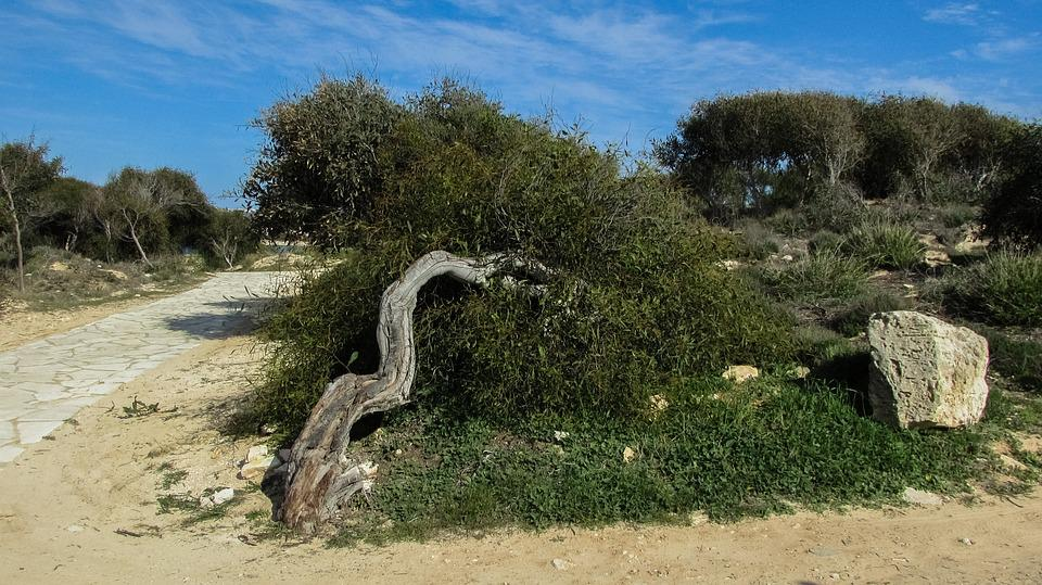 Cyprus, Ayia Napa, Makronissos Beach, Tree, Path