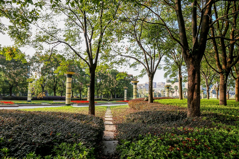 Path, Green, Zhejiang University, Park, Tree