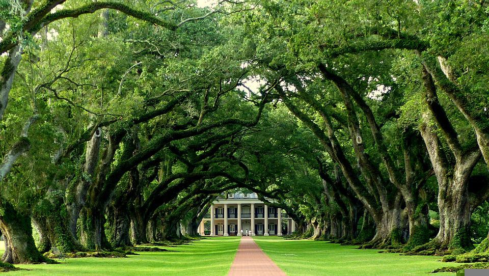 Oak, Path, Park, Trees, Plantation, Historic