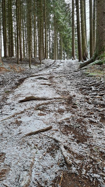 Winter, Trees, Path, Trail, Woods, Forest, Undergrowth