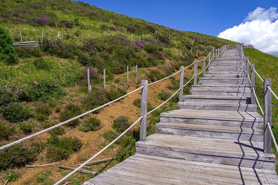 Merveilleux Stairs, Wood, Path, Landscape, Hill, Nature, Heather