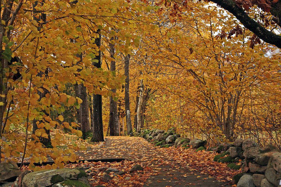 Path, Forest, Autumn, Trees, Woods, Leaves, Foliage
