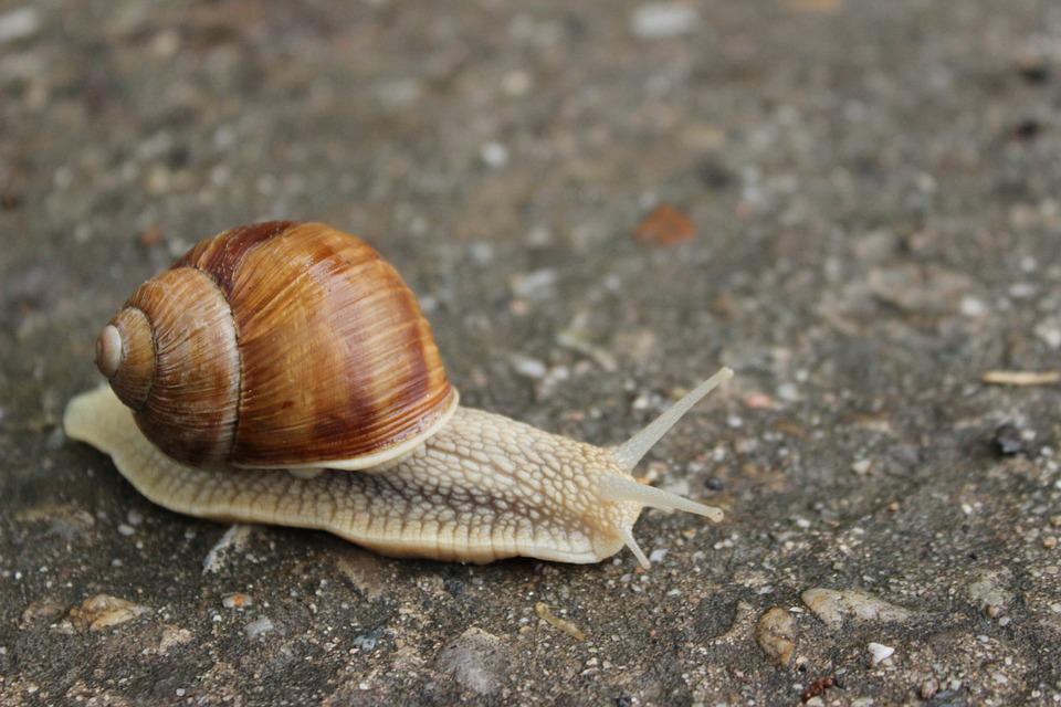 Worm, Path, Snail