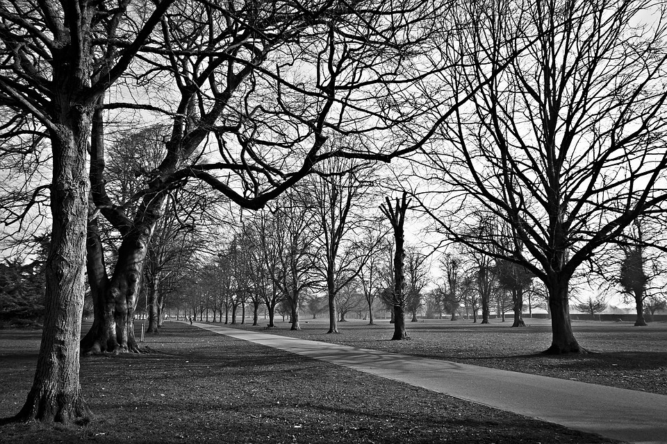 Trees, Parks, Black And White, Paths, Pathways, Walkway
