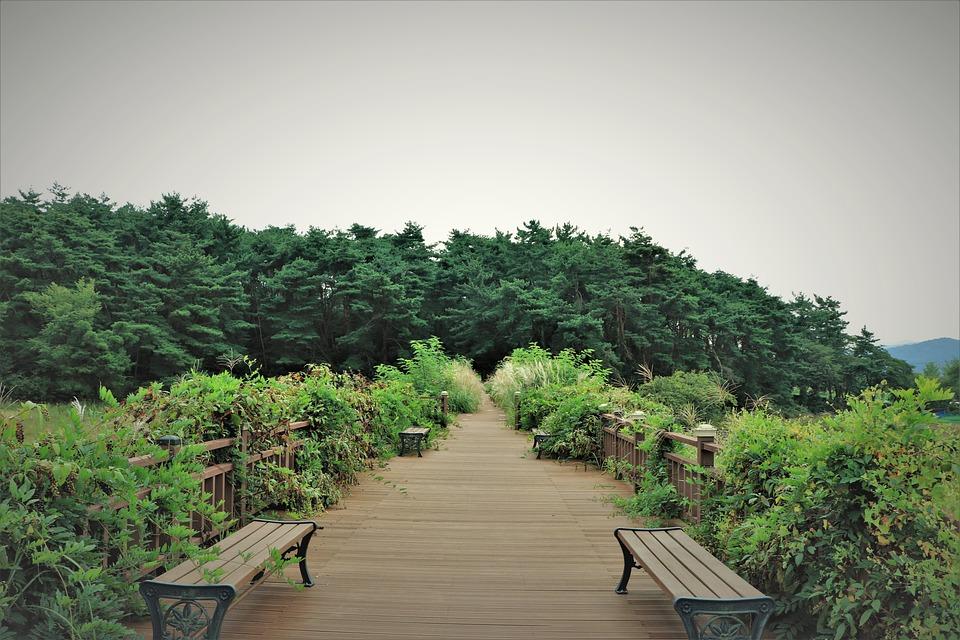 Path, Paths, Bridge, Bridges, Walk, Walking, Bench