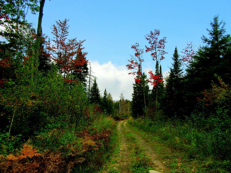 Autumn, Fall, Woodland, Forest, Pathway, Nature Trail