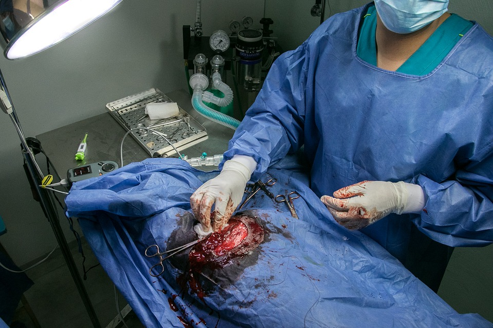 Surgery, Veterinary, Operation, Hospital, Pet, Patient