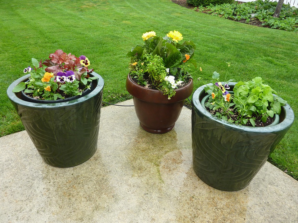 Flowers, Pots, Patio, Potted, Containers, Garden, Plant