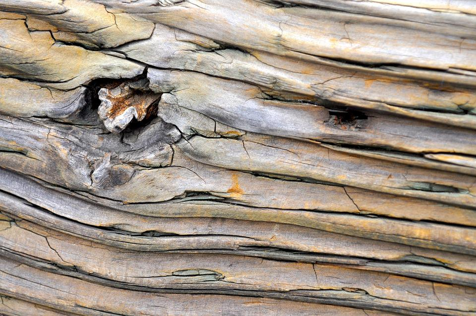 Wood, Tree, Forest, Background, Texture, Pattern, Brown