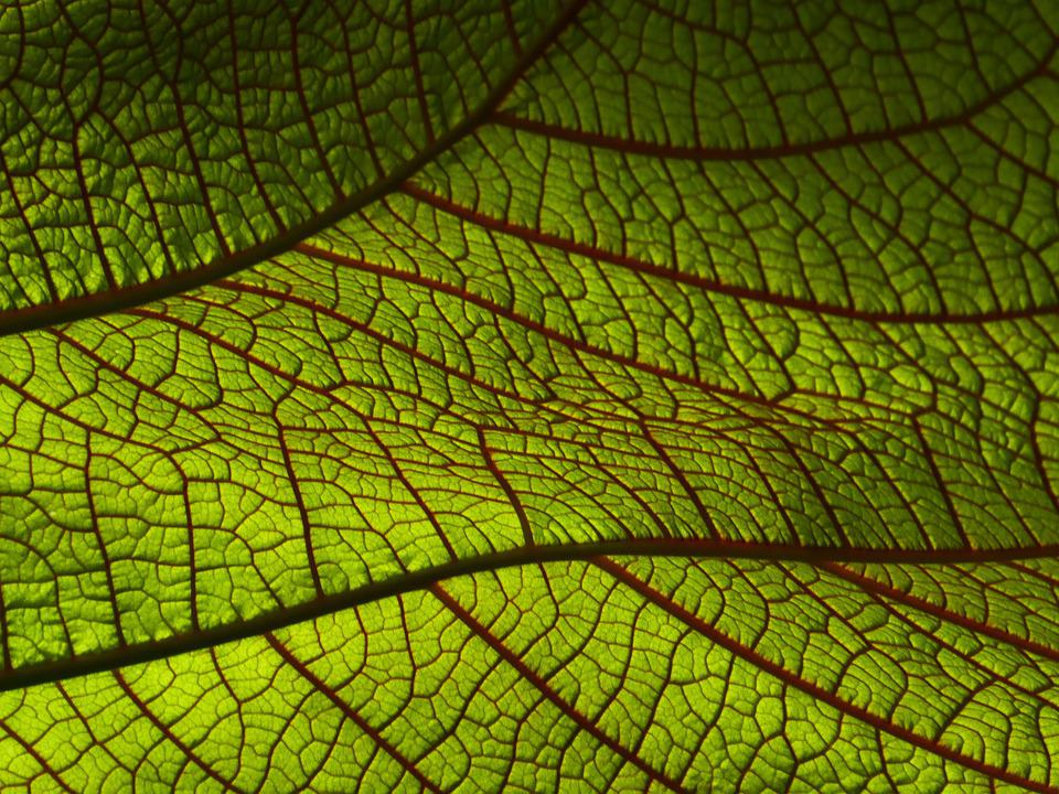 Leaf, Macro, Nature, Texture, Pattern, Tropical, Jungle