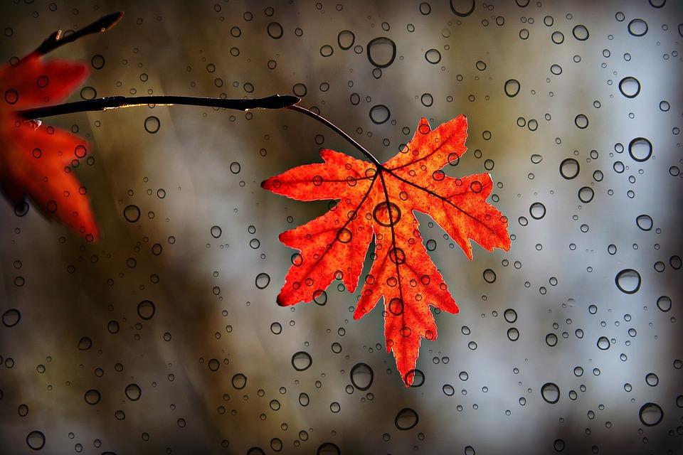 Leaf, Foliage, Autumn Color, Vein, Pattern, Shape