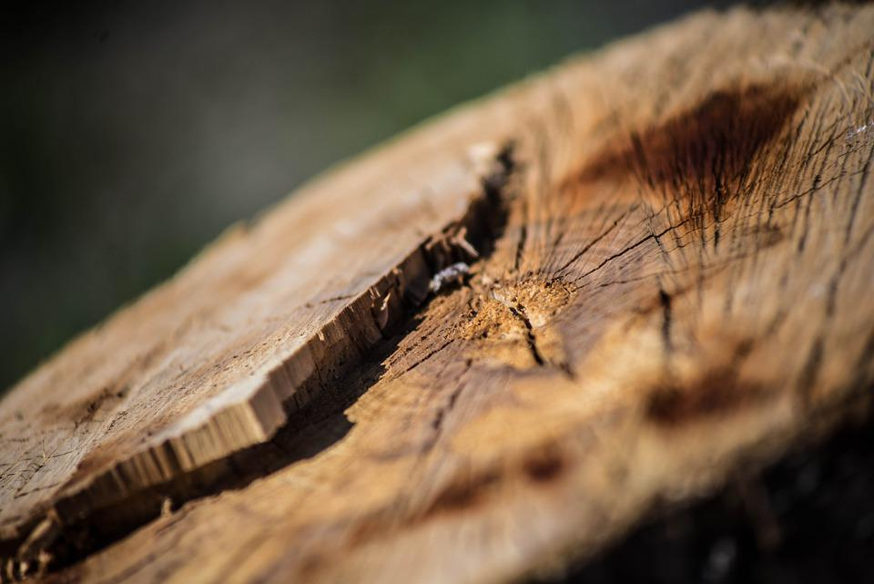 Wood, Structure, Texture, Tree, Pattern, Nature, Old