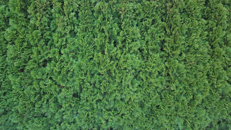 Hedge, Texture, Green, Pattern, Structure, Bush