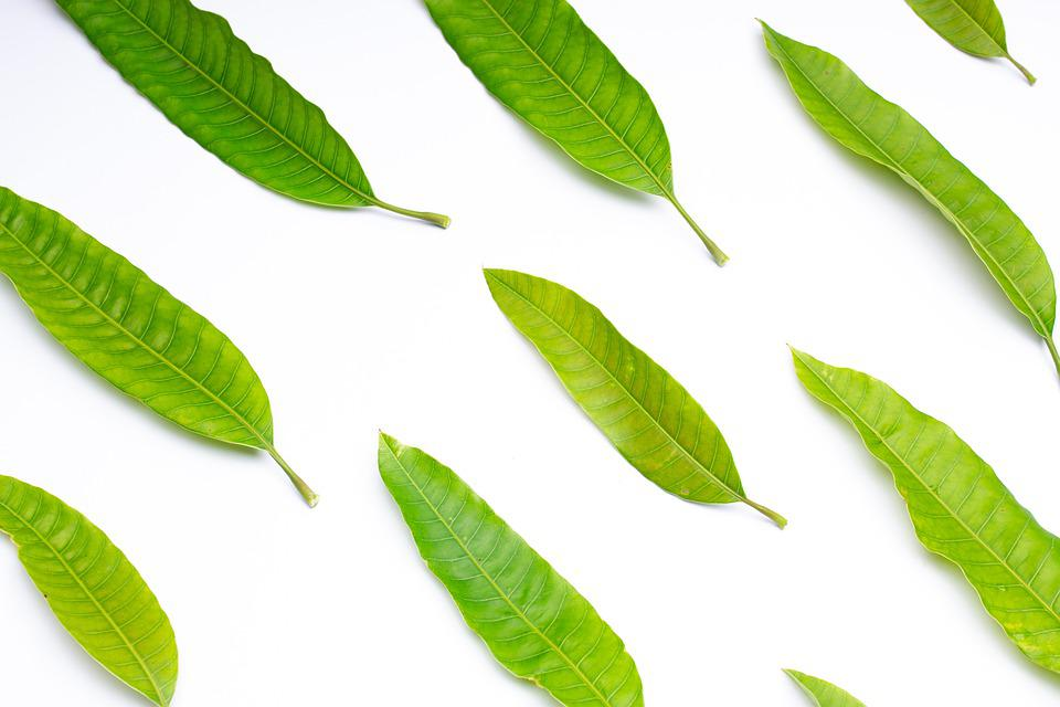 Leaves, Foliage, Plants, Texture, Pattern, Agriculture