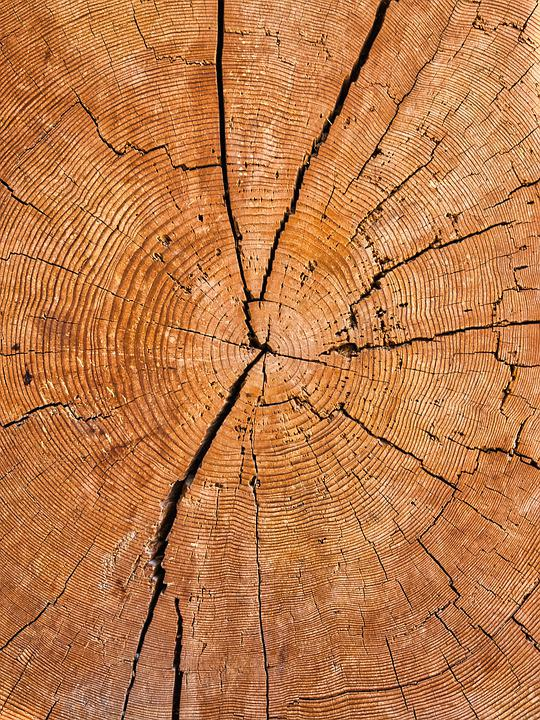 Annual Rings, Tree, Wood, Structure, Pattern