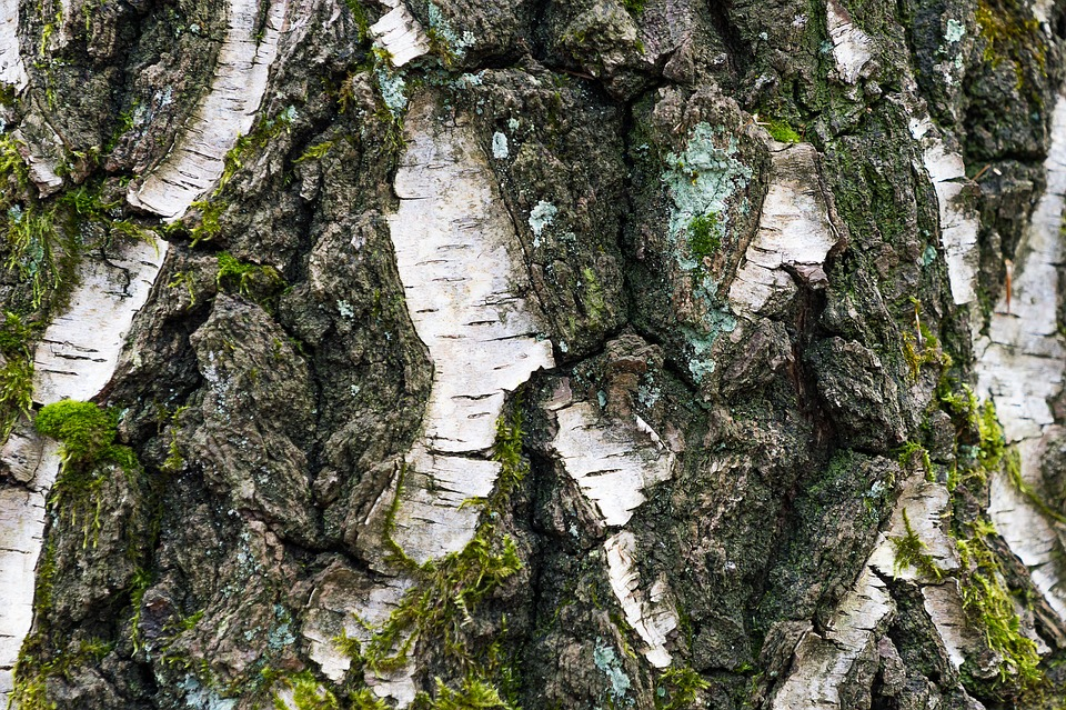 Tree, Bark, Nature, Wood, Pattern, Structure, Green