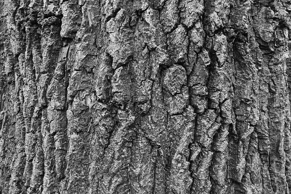 Bark, Tree, Nature, Texture, Wood, Pattern, Rough