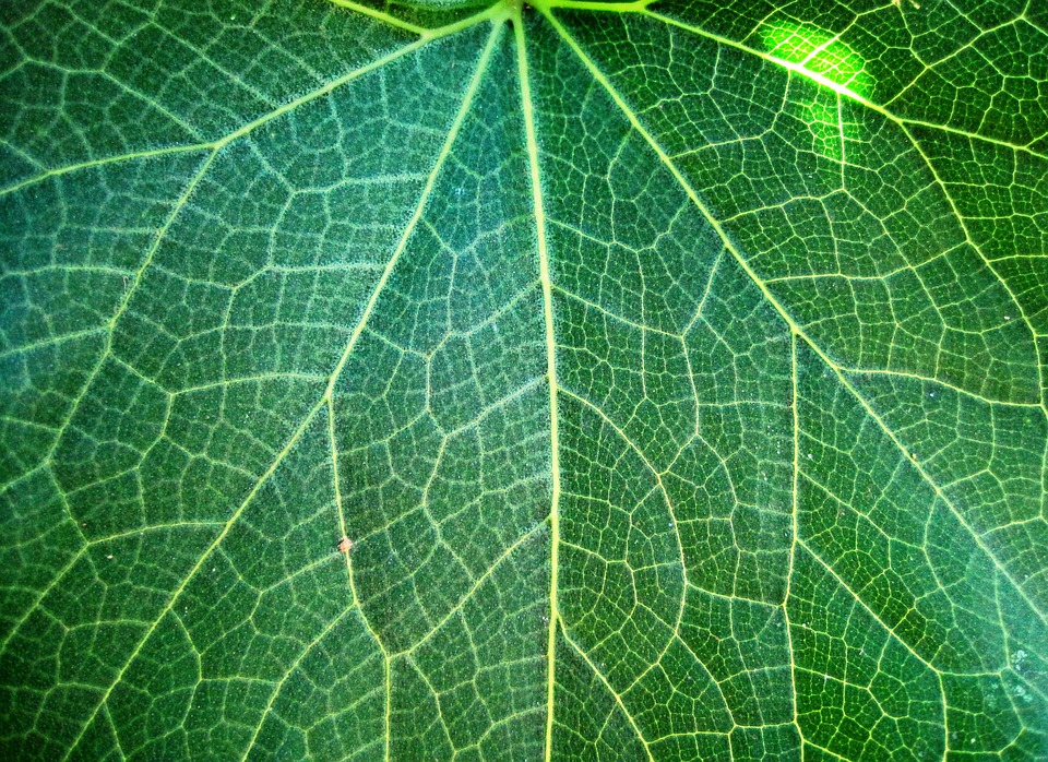 Leaf, Veins, Patterned, Plant, Natural, Botanical