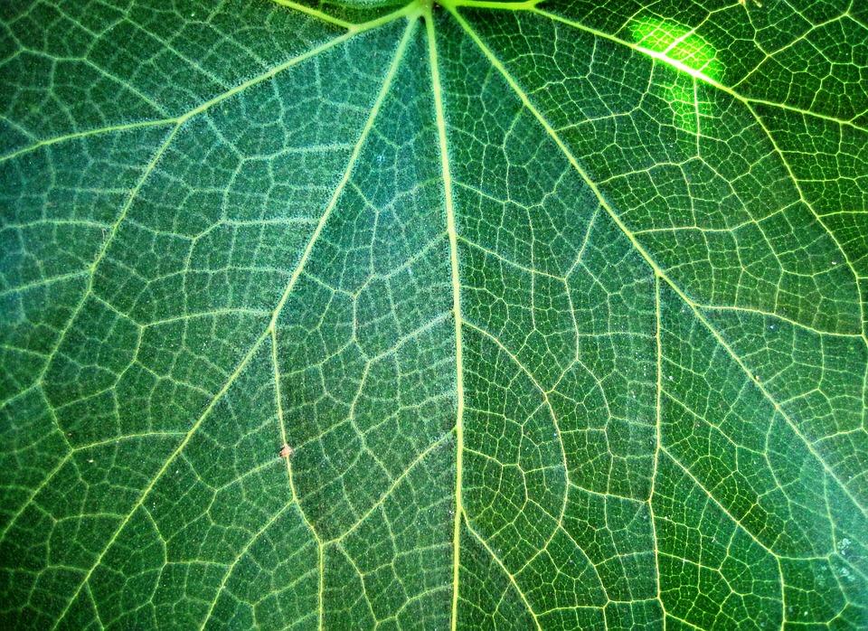 Leaf, Veins, Patterned, Plant, Natural, Botanical