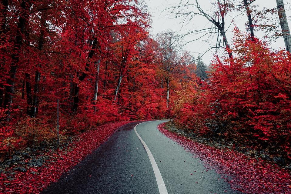 Road, Countryside, Autumn, Fall, Roadway, Pavement