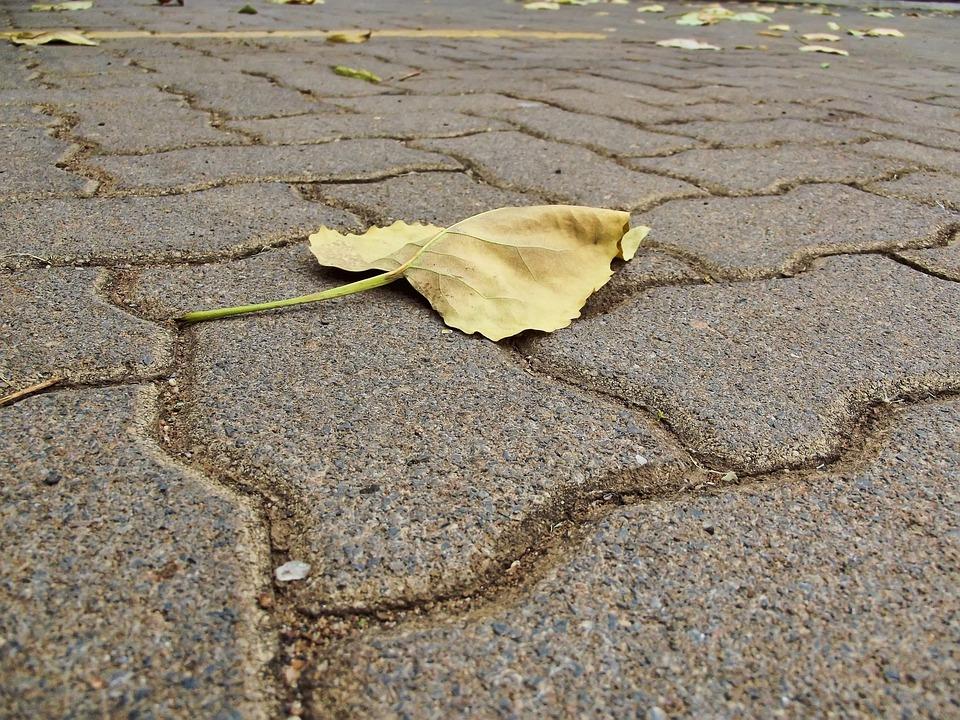 Paving, Pavement, Leaf, Autumn, Foliage, Hartbeespoort