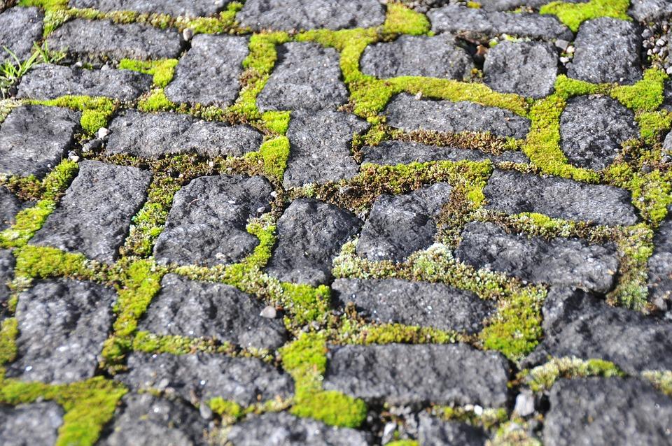 Paving Stones, Moss, Stone, Grey, Green, Ground