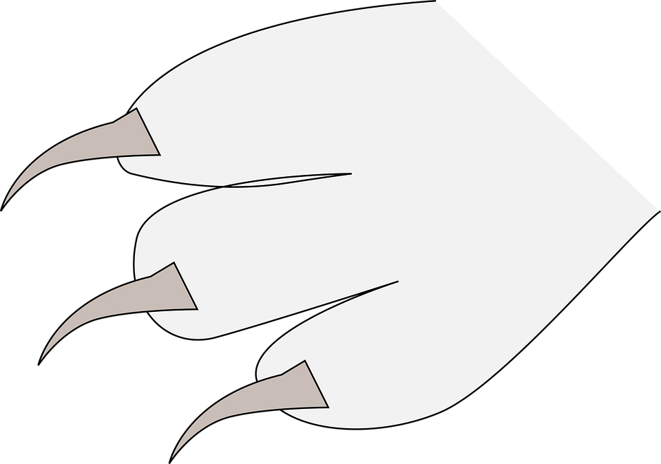 Claws, Fingers, Paw, Three