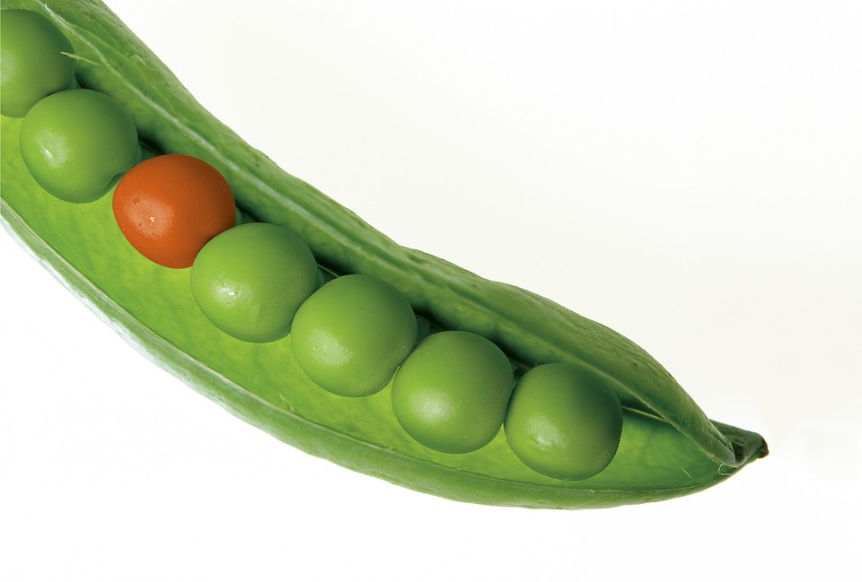 Peas, Pod, Pea Pod, Green, Fresh, Different, Stand Out