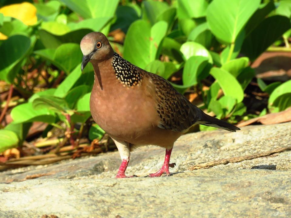Dove, Birds, Peace