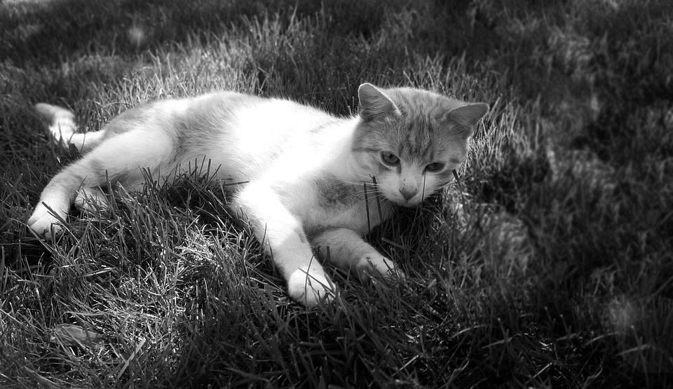 Cat, Tomcat, Breather, Peace, Grass