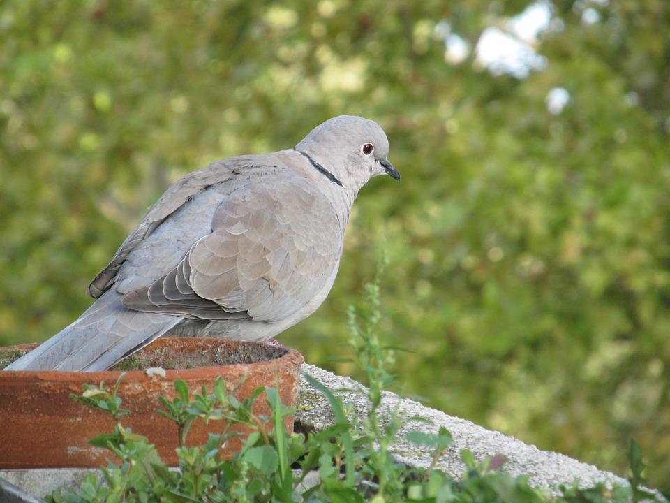Nature, Bird, Wildlife, Outdoors, Animal, Dove, Peace