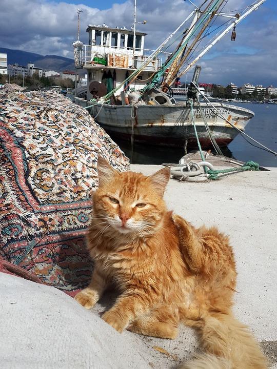Turkey, Izmir, Marine, Cat, Cloud, Peace, Horizon