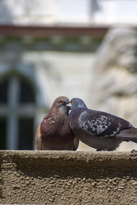 Doves, Love, Peace, Harmony