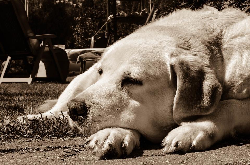 Dog, Peace Of Mind, Animals, Pet, Animal, Happiness