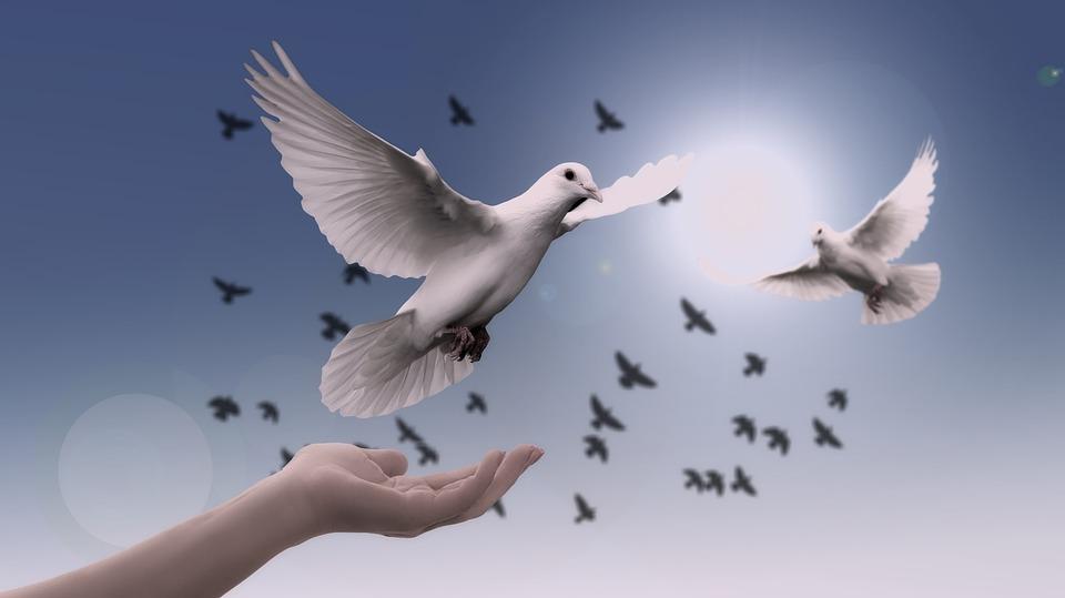 Dove, Hand, Trust, God, Pray, Prayer, Peace, Soul