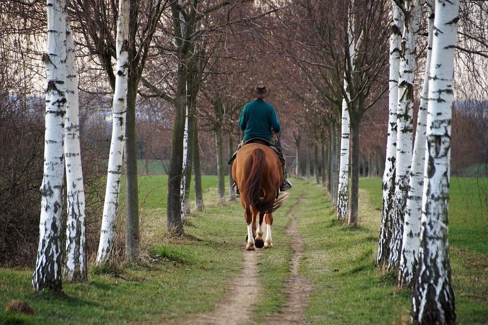 Horse, Rider, Vernal, Spring, Ride, Peace, Riding